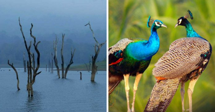 bird sanctuaries near bengaluru
